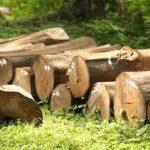 tempat pelelangan kayu